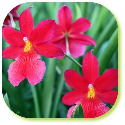 verzorgen orchidee na bloei